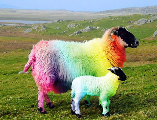 Cloonacool Sheep Festival – 21st/22nd September